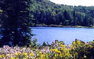 Cranberry Lake Preserve